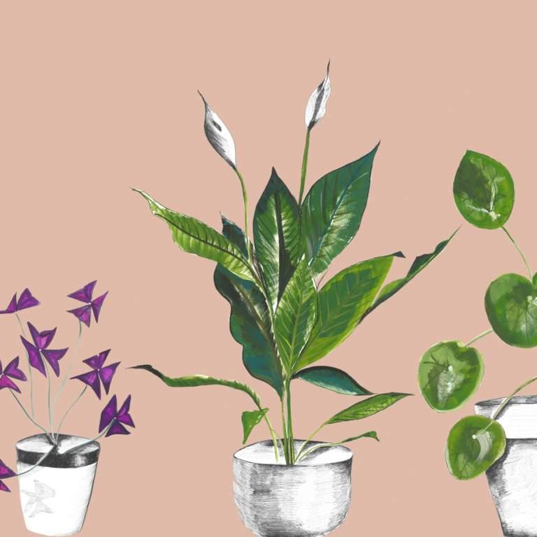 Plant Life in Blush Splashback Sample
