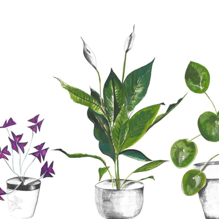 Plant Life in White Splashback Sample