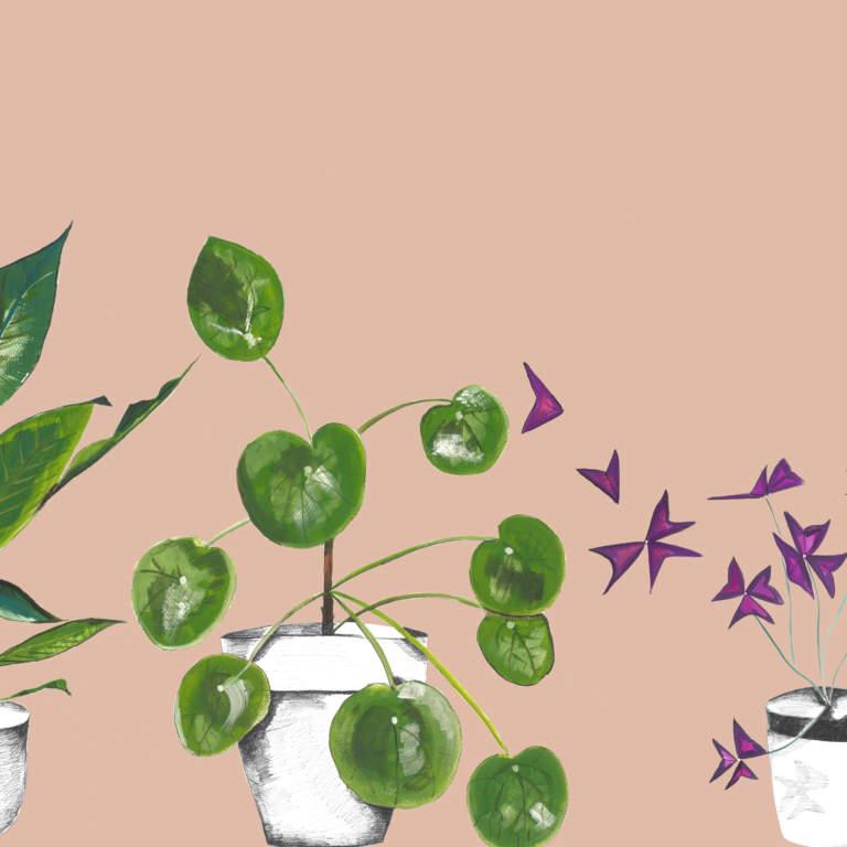 emma Britton Plant Life in blush glass splashback
